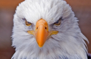 mad.eagle_.image_[1]