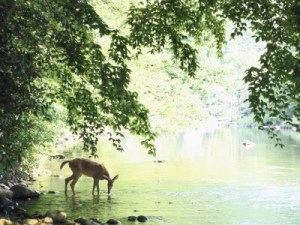 as-the-deer[1]