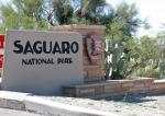 saguaro01[1]
