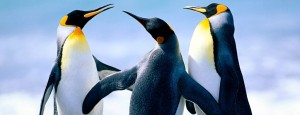 cropped-penguins1[1]