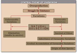 darwinism-theme[1]