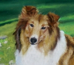 lassie-face[1]