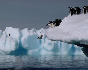 penguin-jump[1]