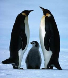 penguin_family[1]
